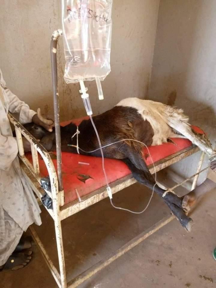BREAKING: Ram tests positive for Coronavirus in Kano